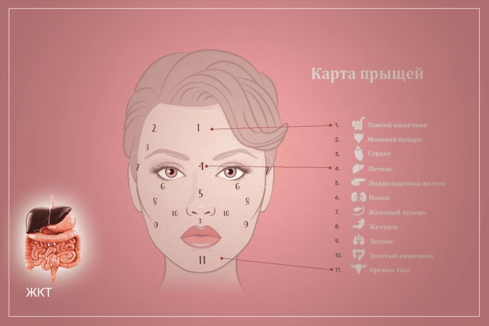 Как состояние желудочно-кишечного тракта влияет на состояние кожи