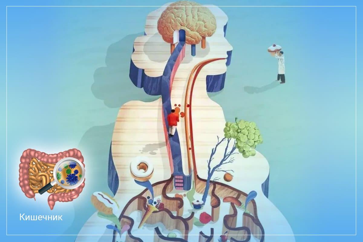 Почему кишечник можно расценивать как второй мозг